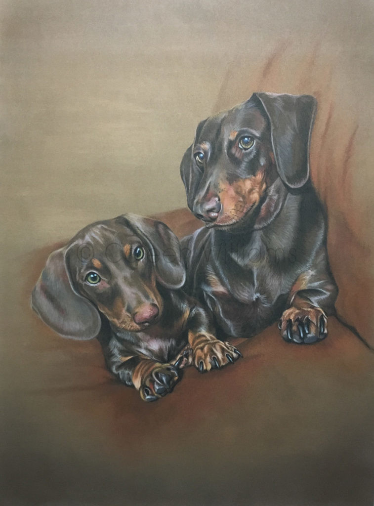 ColArt - Art by Coleen Williams - Buddy Ozzy - Dogs