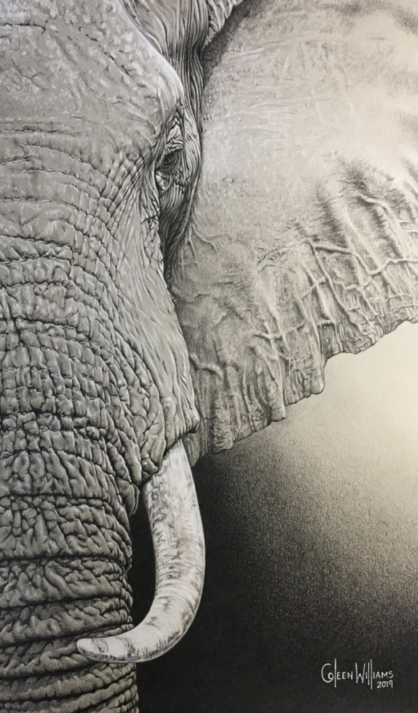 ColArt - Art by Coleen Williams - Etched in Time - Elephant
