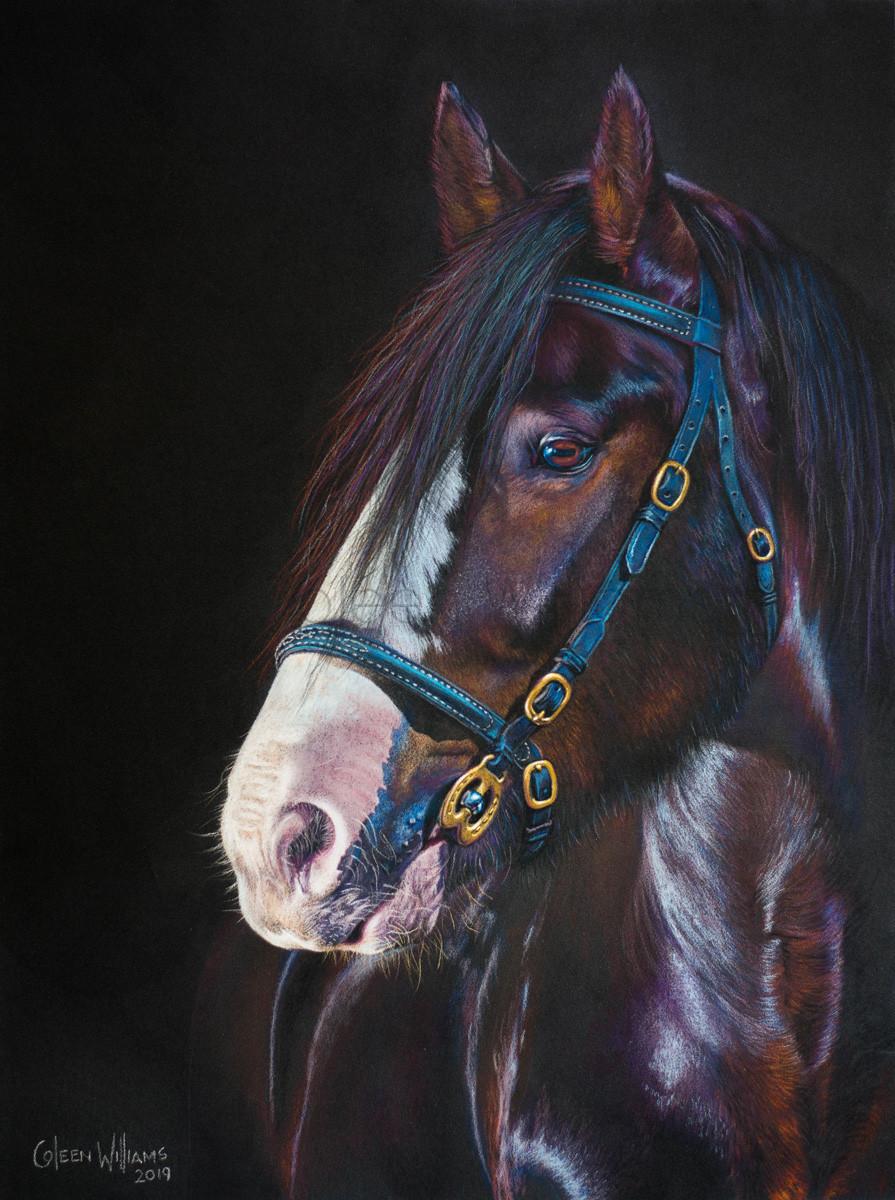 ColArt - Art by Coleen Williams - Alfie - Horse