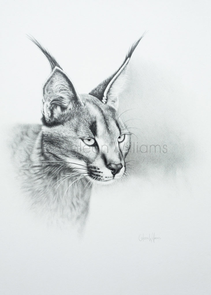 ColArt - Art by Coleen Williams - Tuft Guy - Caracal