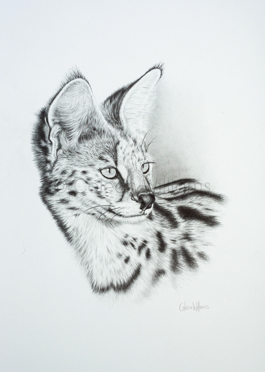 ColArt - Art by Coleen Williams - Sir Val - Serval