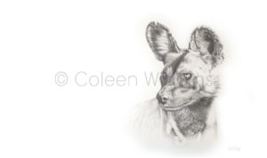 ColArt - A Sense of Knowing - Wild dog