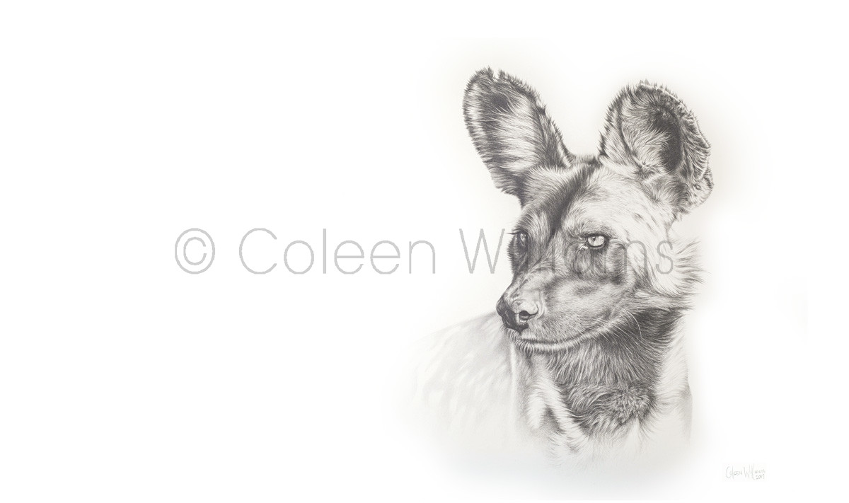 ColArt - Art by Coleen Williams - A Sense of Knowing - Wild dog