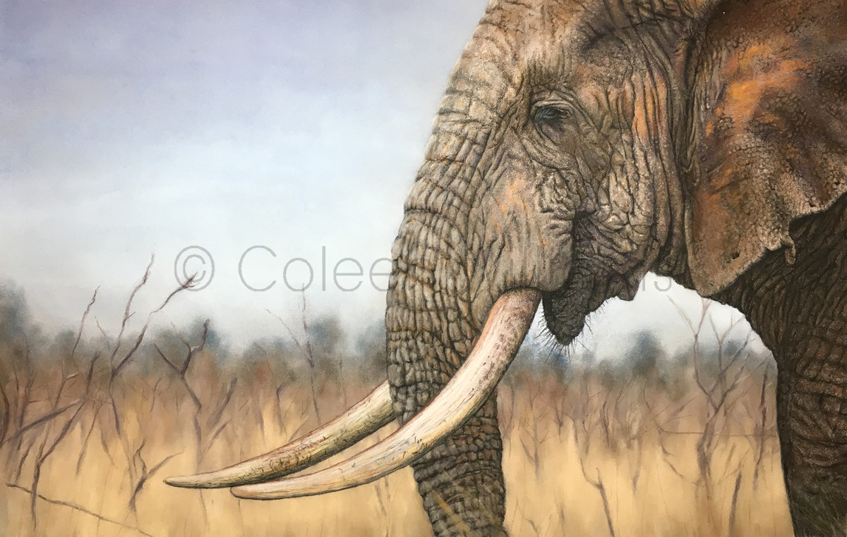 ColArt - Art by Coleen Williams - A Wrinkle in Time - Elelphant