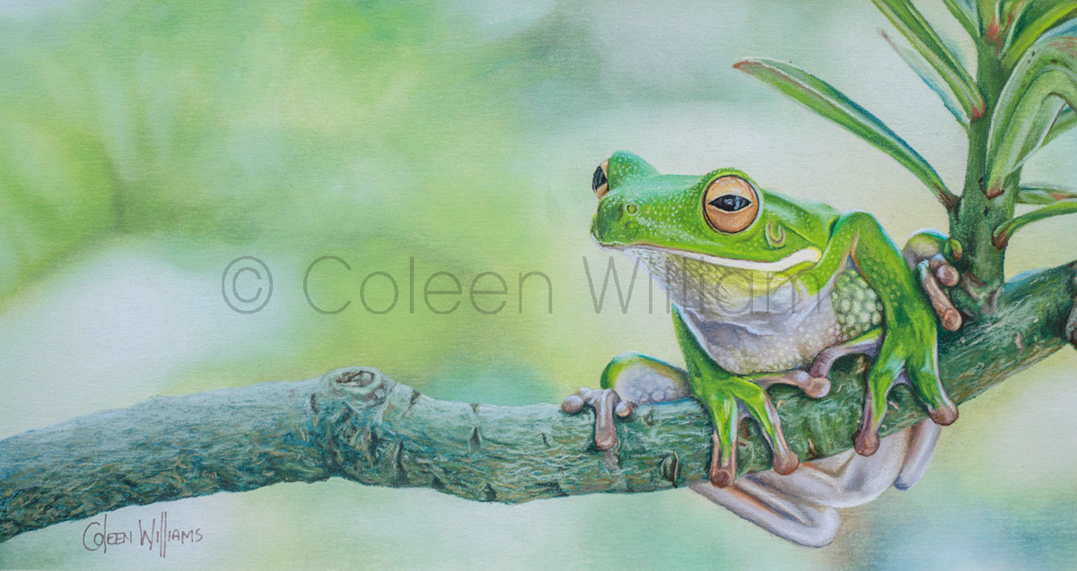 ColArt - Art by Coleen Williams - Branch Manager - frog