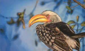 ColArt - Bill Shivers - Yellow billed hornbill