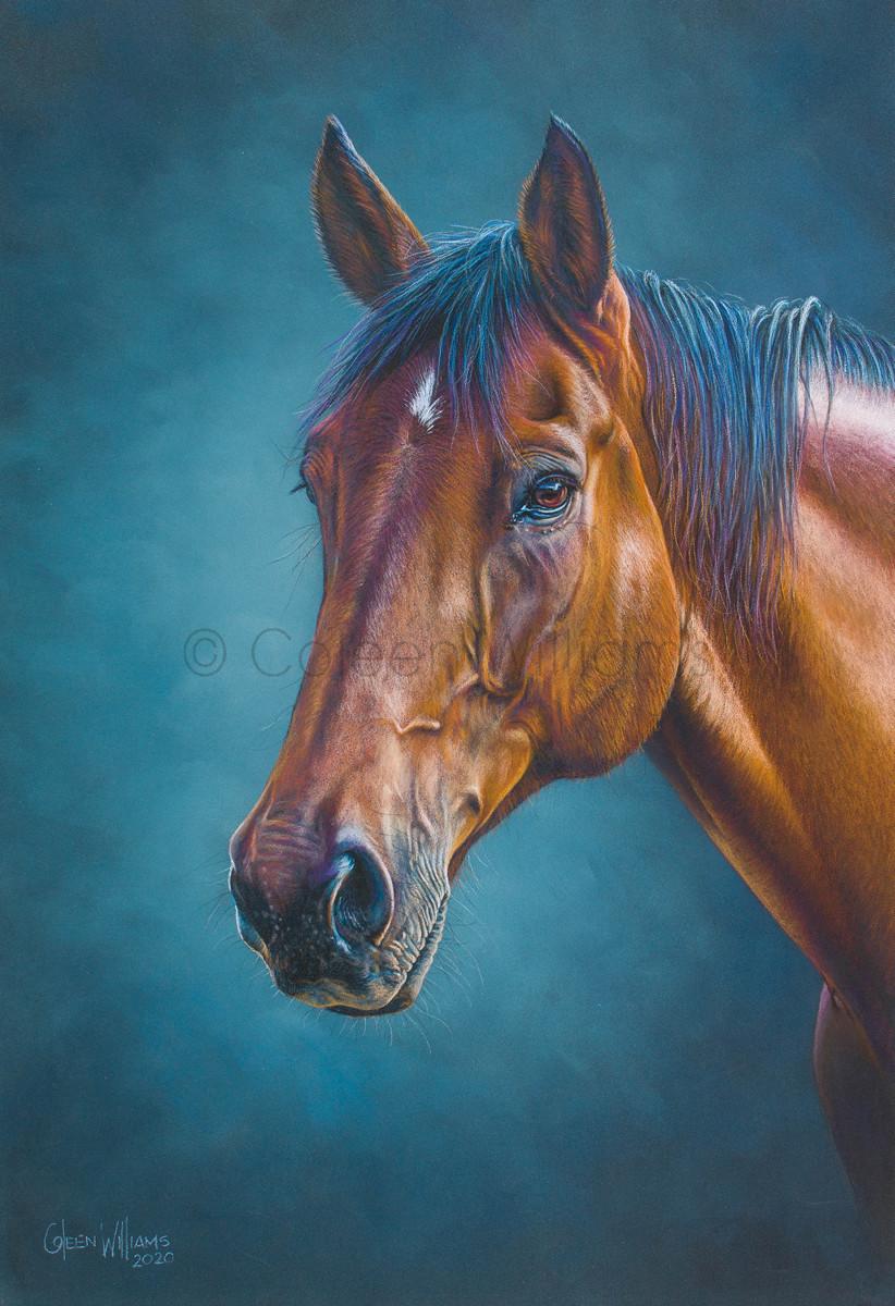ColArt - Art by Coleen Williams - Sandman - Horse