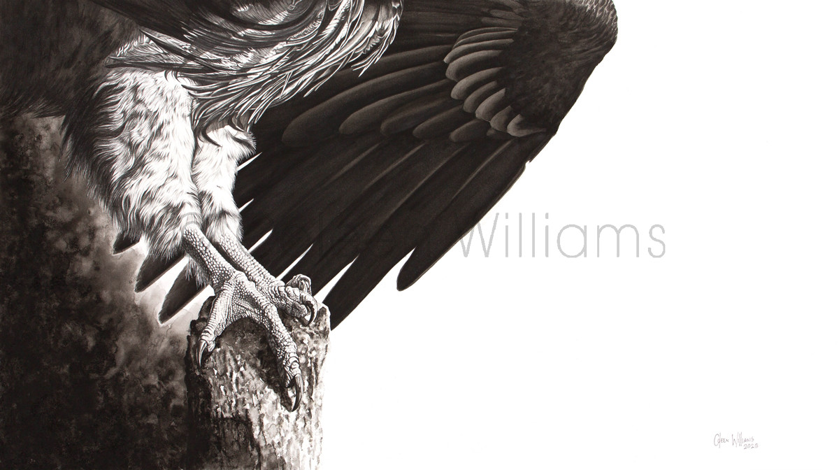 ColArt - Art by Coleen Williams - Talons - vulture