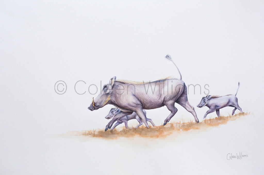 ColArt - Art by Coleen Williams - Three Little Pigs - Warthogs