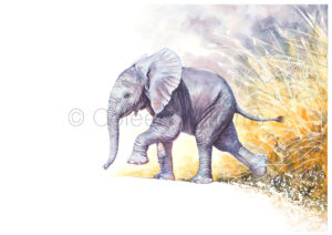 ColArt - Art by Coleen Williams - Africa's Babies - Elephant