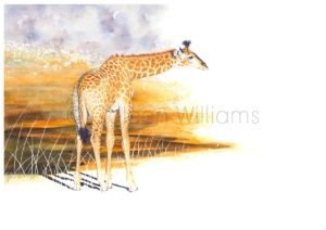 ColArt - Art by Coleen Williams - Africa's Babies - Giraffe