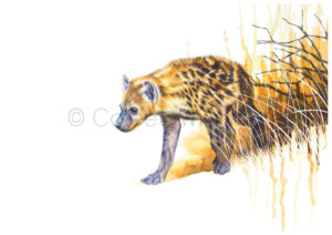ColArt - Art by Coleen Williams - Africa's Babies - Hyena