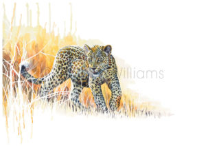 ColArt - Art by Coleen Williams - Africa's Babies - Leopard