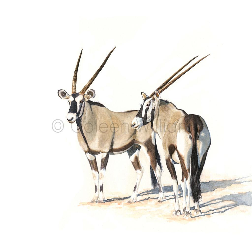 ColArt - Antelope Squares - Gemsbok