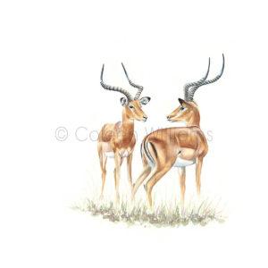 ColArt - Antelope Squares - Impalas