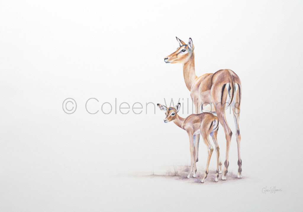 ColArt - Endearing Echo - Impala baby