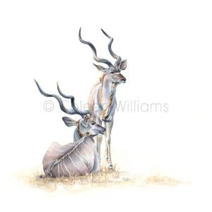ColArt - Antelope Squares - Kudu