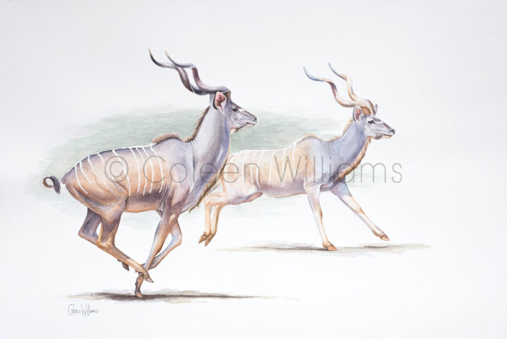 ColArt - Art by Coleen Williams - Majestic Motion - Kudus