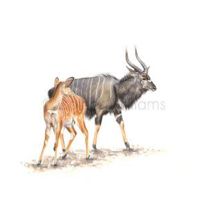 ColArt - Antelope Squares - Nyala