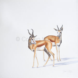 ColArt - Antelope Squares - Springbok