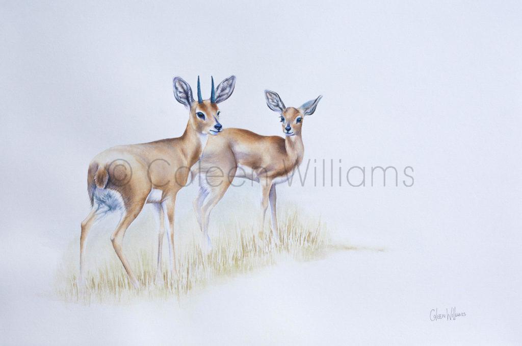 ColArt - Art by Coleen Williams - Steenbok
