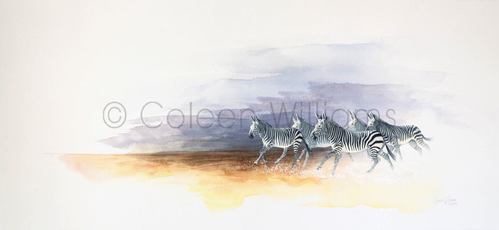 ColArt - Art by Coleen Williams -Bedazzled - Mountain Zebras